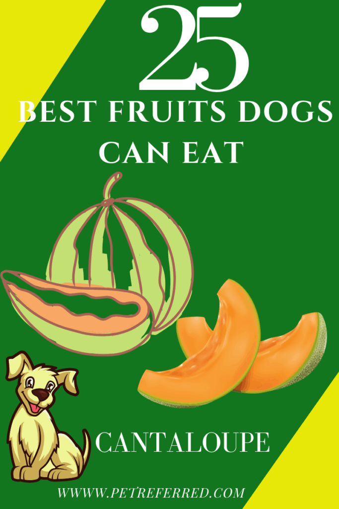 ARE CANTALOUPE GOOD FOR DOGS