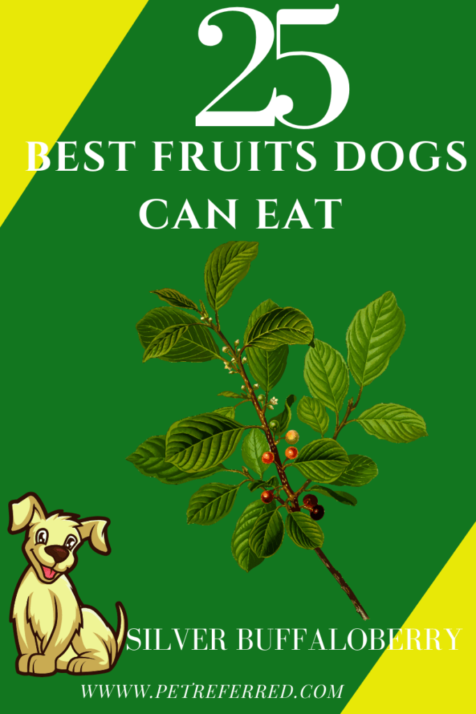 are Silver Buffalo berries good for dogs