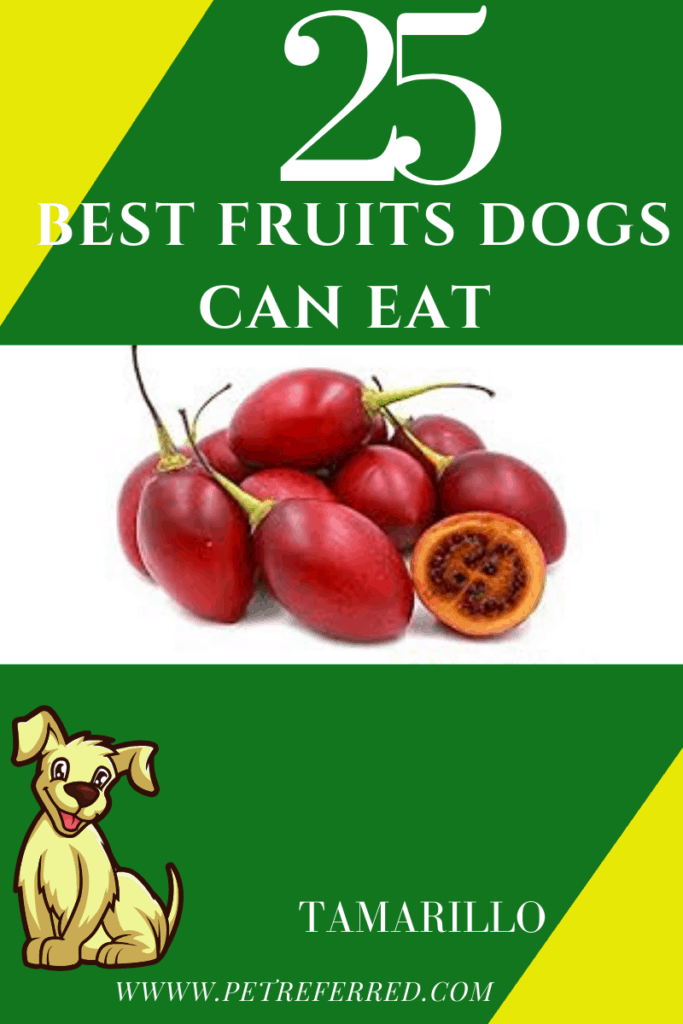 is tamarillo good for dogs