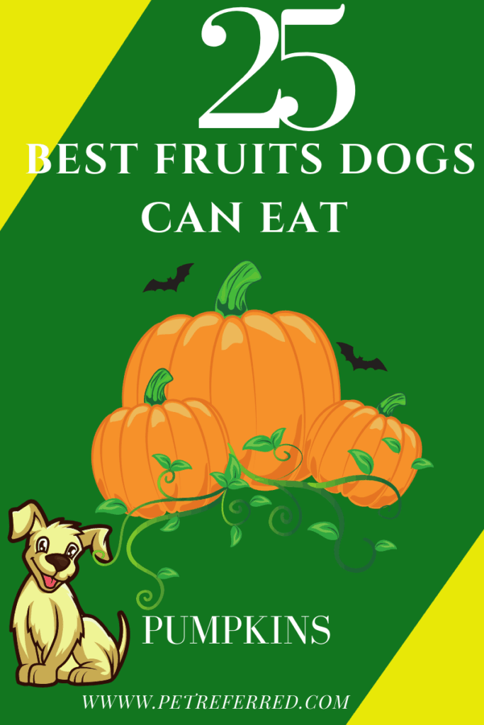 can dogs eat pumpkins