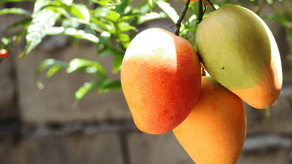 Can Dogs eat Mango fruits?