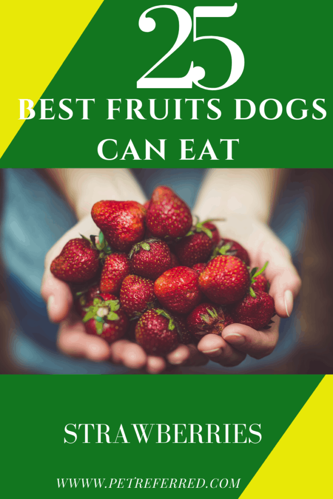 Is STRAWBERRY good for a dog?