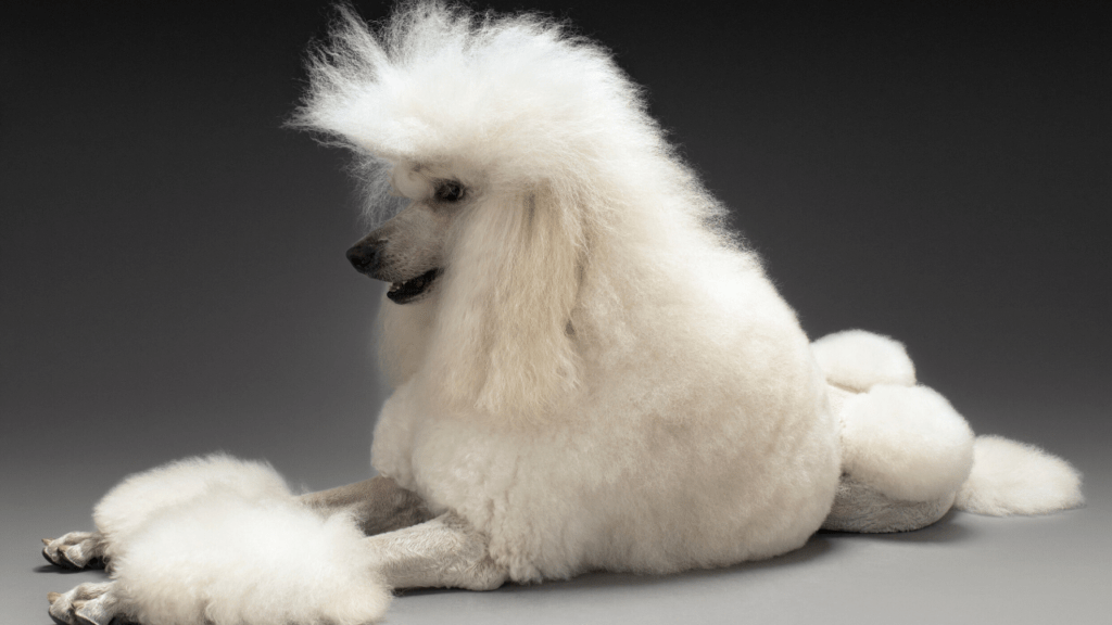 What's the most hypoallergenic dog?
