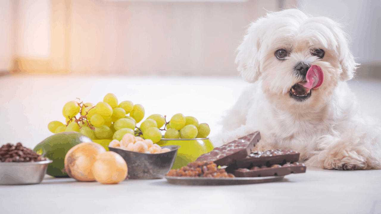 What fruits are bad for dogs?