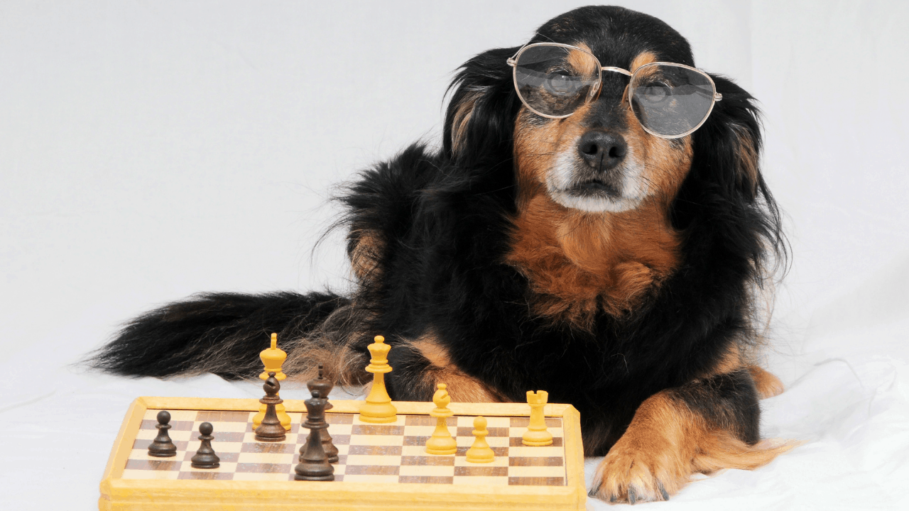 What is the most intelligent breed of dog?