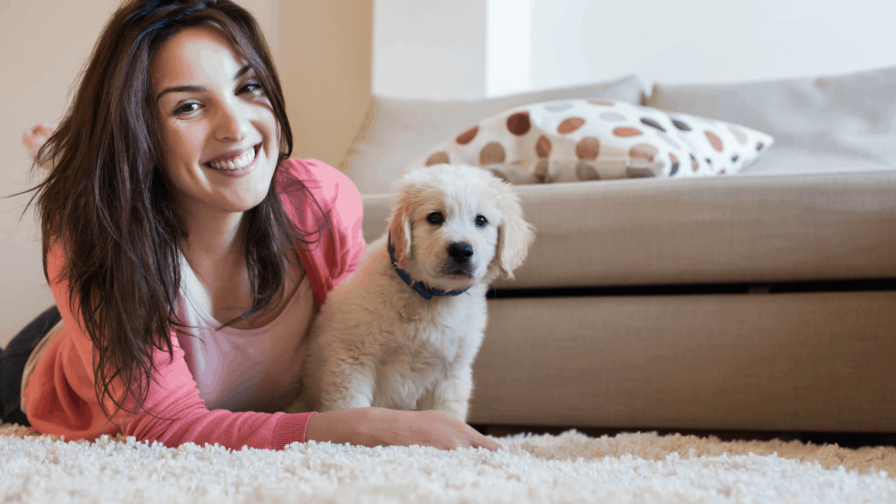 Which dog is best for first-time owners?