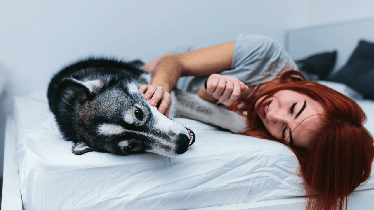 Why Does My Dog Protect Me And Not My Husband?