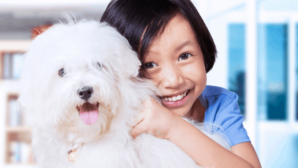 Long-haired Small White And Fluffy Maltese Dog Breed.