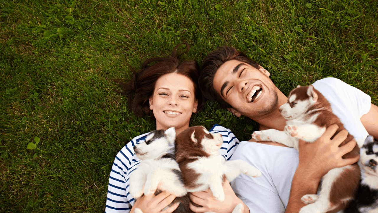 how to find reputable dog breeders in Ontario